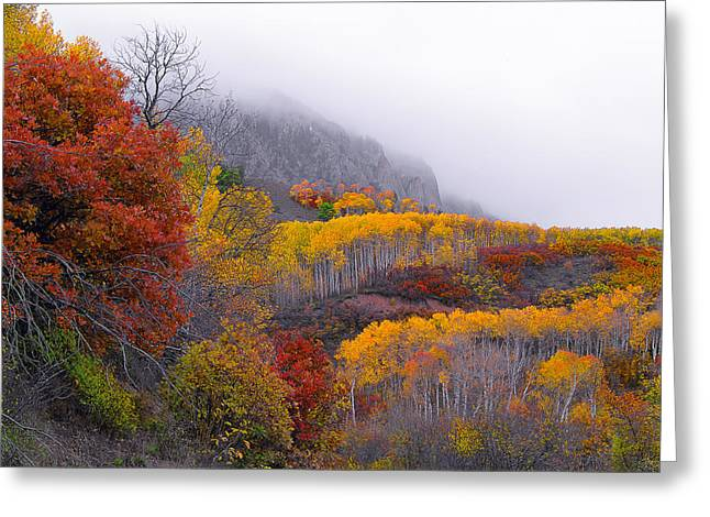 Aspens In Fall Greeting Cards - Mystic Greeting Card by Tim Reaves