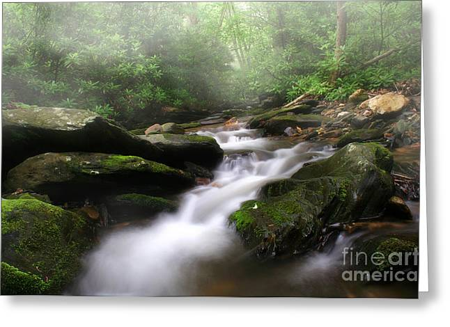 Creekbed Greeting Cards - Mystical Greeting Card by Darren Fisher