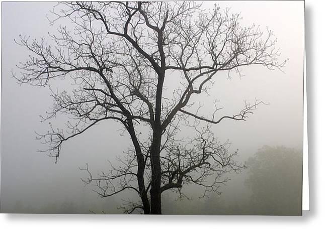 Mysty Tree 3 Greeting Card by Marty Koch