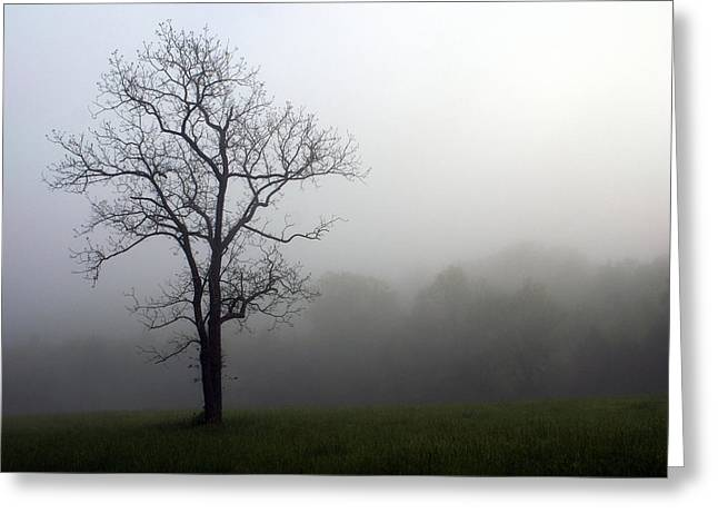 Mysty Tree Greeting Card by Marty Koch