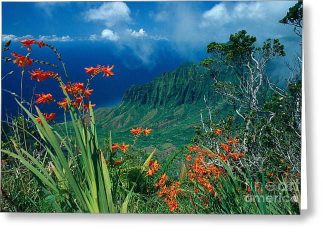 Ocean Art Photos Greeting Cards - Na Pali Coast Greeting Card by David Cornwell/First Light Pictu - Printscapes