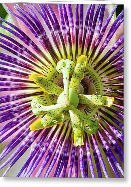 Holy Week Greeting Cards - Nails Wounds and Thorns Greeting Card by Dawn Currie
