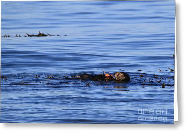 Ocean Mammals Greeting Cards - Seaweed and Seafood Wrap Greeting Card by Craig Corwin