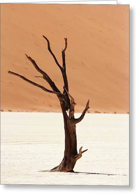 Namib Desert Greeting Card by Stephen Smith