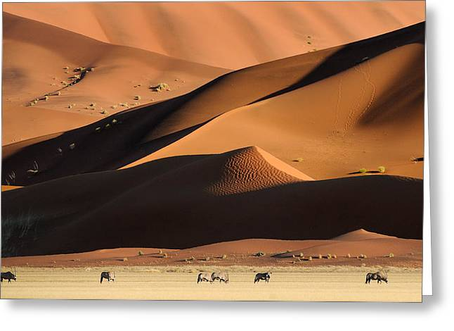 Namib Dunes Greeting Card by Muriel Vekemans