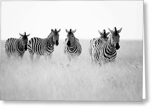 Papiorek Greeting Cards - Namibia Zebras II Greeting Card by Nina Papiorek