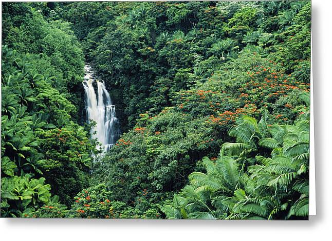 Hamakua Greeting Cards - Nanue Falls Hawaii Greeting Card by Greg Vaughn