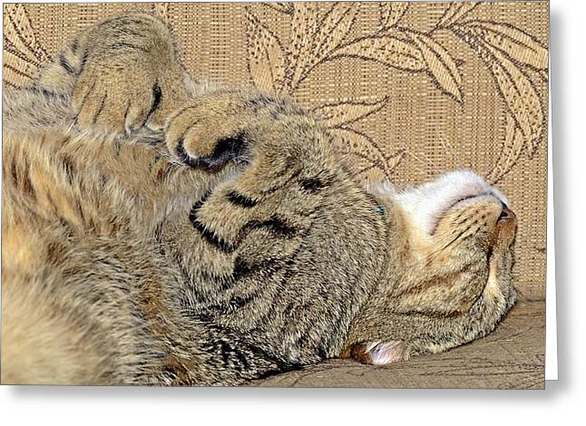 Photographs Greeting Cards - Nap Time Again Greeting Card by Susan Leggett