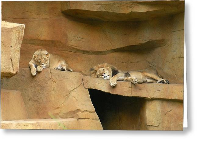 Nap Time Greeting Card by Leeann Stumpf