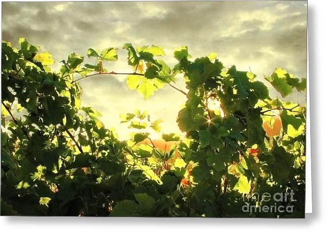Grape Vine Greeting Cards - Napa Dusk Greeting Card by Ellen Cotton