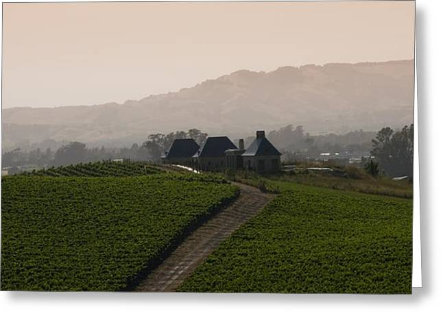 Zinfandel Greeting Cards - Napa Valley Greeting Card by Peter Verdnik