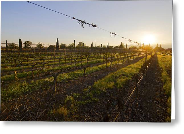 Californian Greeting Cards - NAPA Valley Sunset Greeting Card by Shangwei Fang
