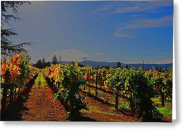 Napa Valley Digital Greeting Cards - Napa Valley  Greeting Card by Vijay Sharon Govender