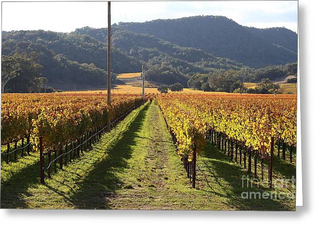 Pastoral Vineyards Greeting Cards - Napa Valley Vineyard . 7D9020 Greeting Card by Wingsdomain Art and Photography