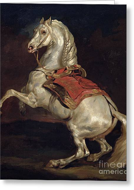 Cheval Greeting Cards - Napoleons Stallion Tamerlan Greeting Card by Theodore Gericault