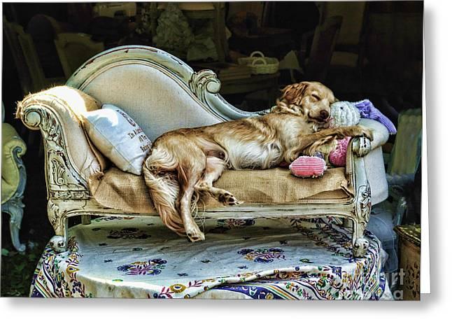 Dog Sleeping Greeting Cards - Napping Dog Promo Greeting Card by Edward Sobuta