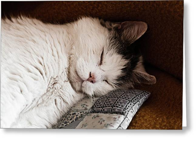 Pussy Greeting Cards - Napping Greeting Card by Mandy Tabatt