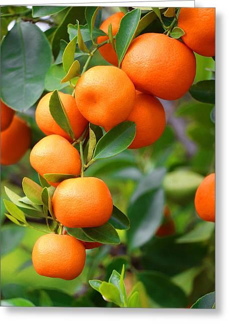 Tangerines Greeting Cards - Naranjita Greeting Card by Iryna Burkova