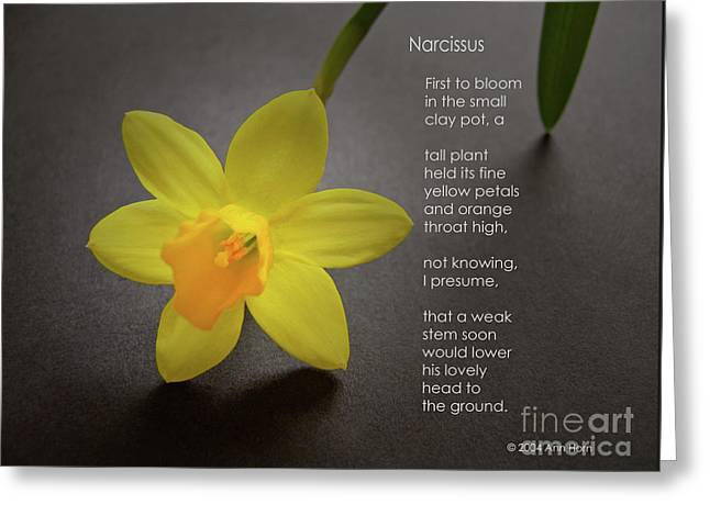 Narcissus Greeting Card by Ann Horn
