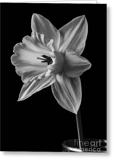 Narcissus Flower Greeting Card by Edward Fielding