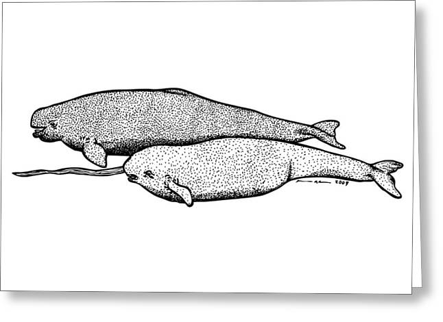 Whale Drawings Greeting Cards - Narwhal and Beluga Whales Greeting Card by Karl Addison