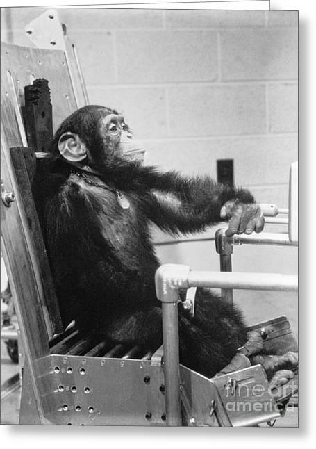4th July Digital Greeting Cards - NASA Chimpanzee Ham prior to space test flight Greeting Card by R Muirhead Art