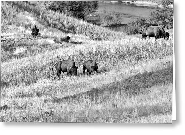 Pasture Greeting Cards - National Bison Range Wildlife Refuge MT USA Greeting Card by Christine Till