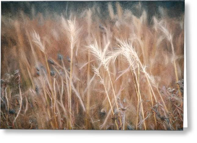 Native Grass Greeting Card by Scott Norris