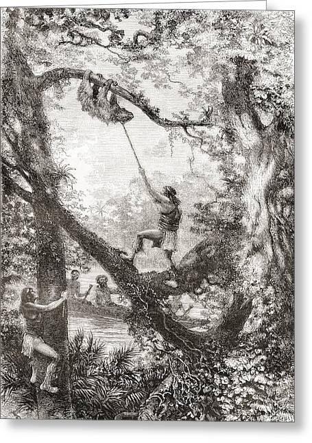 Ethnic Drawings Greeting Cards - Native Indians Capturing A Tree Sloth Greeting Card by Ken Welsh