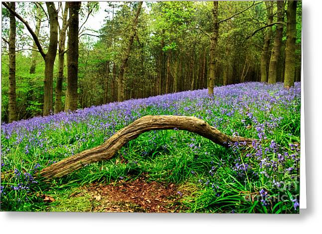 Backlit Greeting Cards - Natural Arch and Bluebells Greeting Card by John Edwards