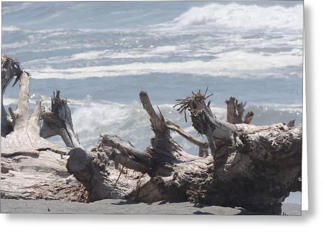 Natural Beach Bench Greeting Card by Traci Hallstrom