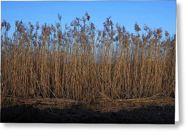 Eye4life Photography Greeting Cards - Natural Beauty Greeting Card by Alicia Morales