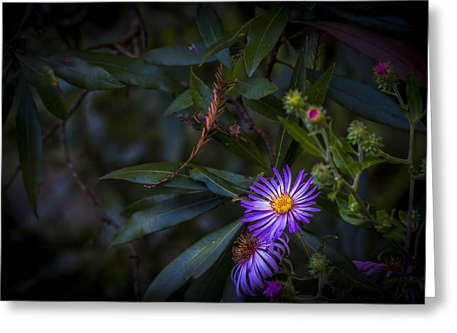 Natural Beauty Greeting Card by Marvin Spates
