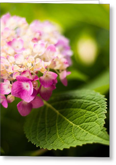 Purple Hydrangeas Greeting Cards - Natural Beauty Greeting Card by Parker Cunningham