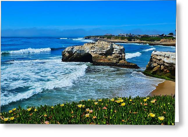 Santa Cruz Greeting Cards - Natural Bridges State Park View Greeting Card by Marilyn MacCrakin