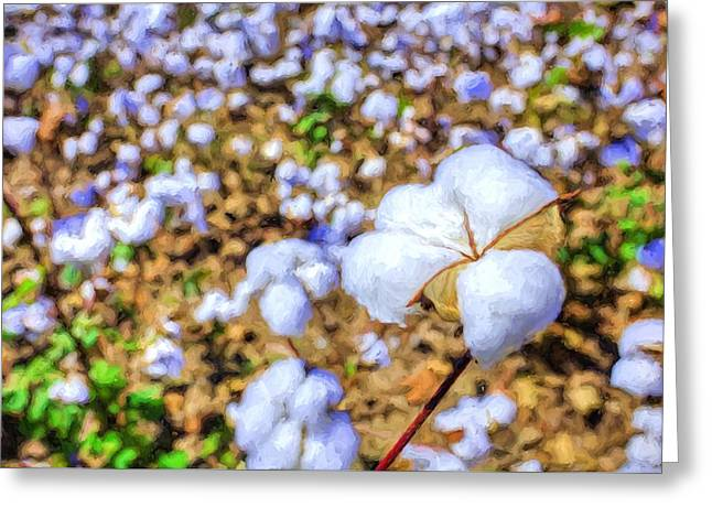 Natural Cotton Greeting Card by JC Findley