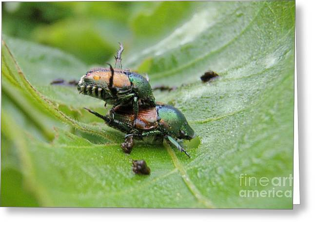 Love Bug Greeting Cards - Natural Love Greeting Card by Kristine Nora