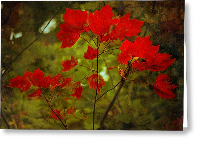 Square Format Greeting Cards - Natural Red Maple Leaves Greeting Card by Loriental Photography
