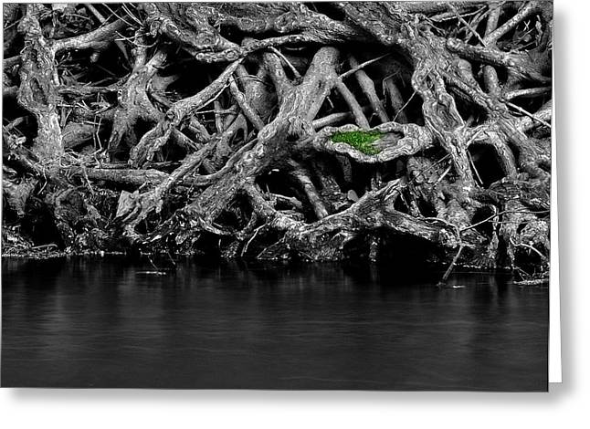 Tree Roots Photographs Greeting Cards - Natural Weaves Greeting Card by Mark Fuller