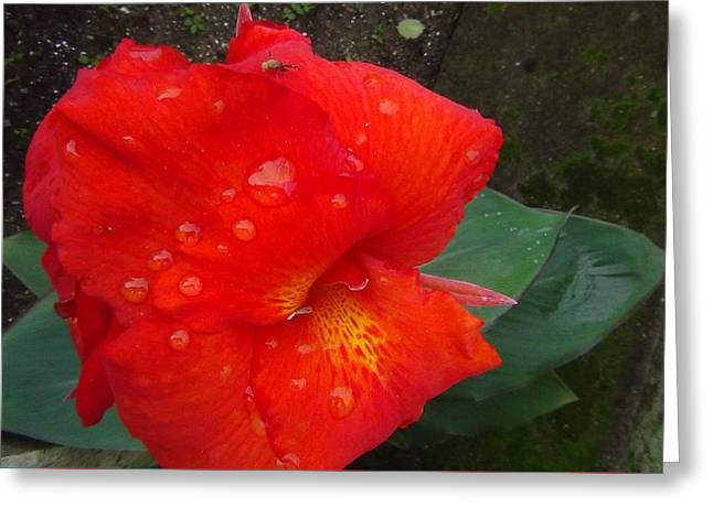 Flowers Reliefs Greeting Cards - Naturaly beautiful flower Greeting Card by Jose Galindo