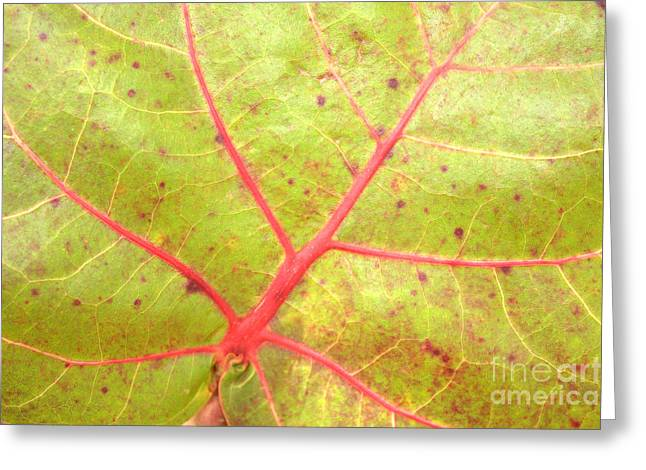 Nature Abstract Sea Grape Leaf Greeting Card by Carol Groenen