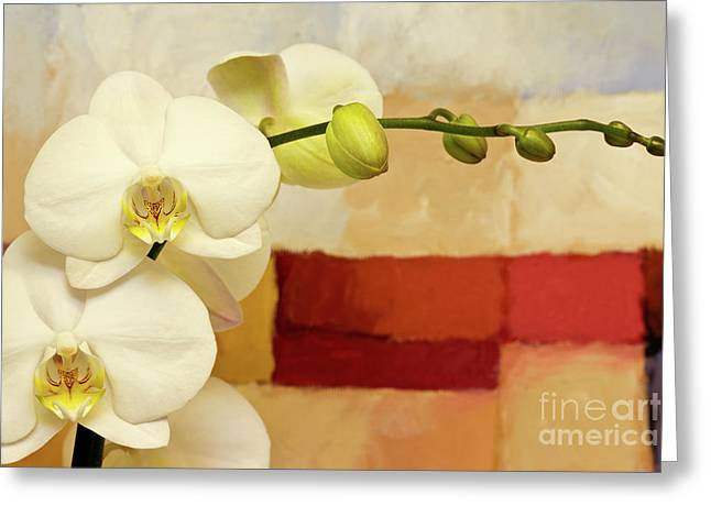 Orchids Art Greeting Cards - Nature and Art Greeting Card by Lutz Baar