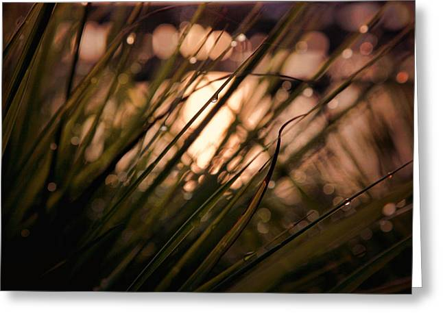 Dewdrops Greeting Cards - Nature at Peace Greeting Card by Toni Hopper