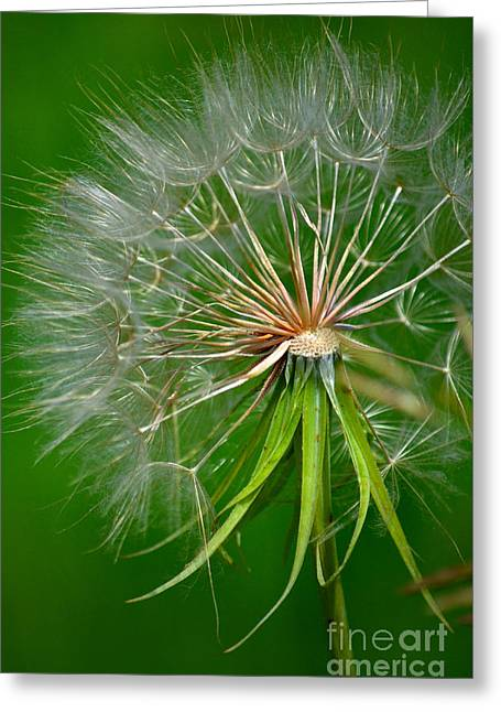 Flower Blossom Greeting Cards - Nature At Work Greeting Card by Deb Halloran