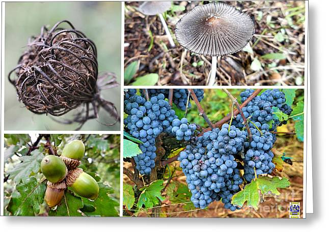 Nature Collage Greeting Card by Casavecchia Photo Art