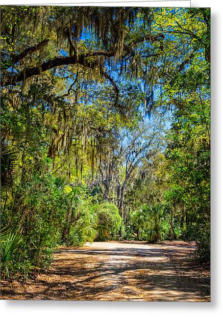 Jacksonville Greeting Cards - Nature Drive Greeting Card by John Bailey