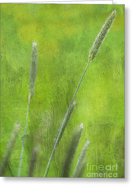 Green Foliage Mixed Media Greeting Cards - Nature Impression Greeting Card by Angela Doelling AD DESIGN Photo and PhotoArt