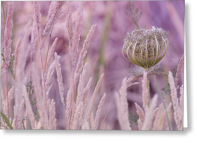 Soft Light Greeting Cards - Nature in Pink Greeting Card by Bonnie Bruno