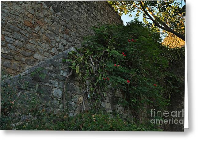 Nature Invades The Castle Greeting Card by Angelo DeVal