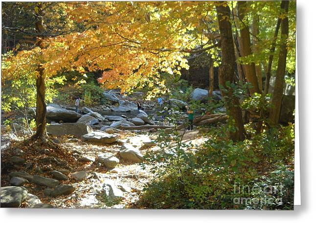 Fishing Creek Greeting Cards - Nature Trail Greeting Card by Kyla Walker